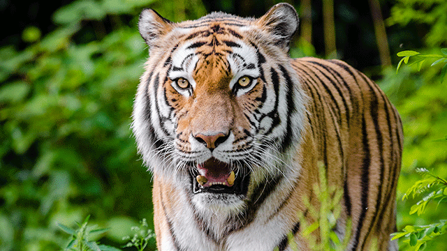 A new set of fangs: Asia's tech tigers storm the ASX