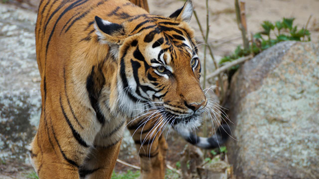 Asian tech: Tiger amongst the bears