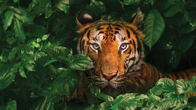 A deep dive into the BetaShares Asia Technology Tigers ETF (ASIA)